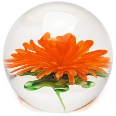 Medium Paperweight - Chrysanthemum Orange Glow