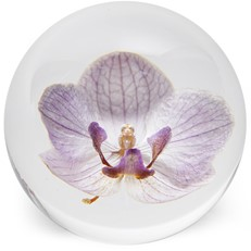 FloraCulture Paperweight - Orchid