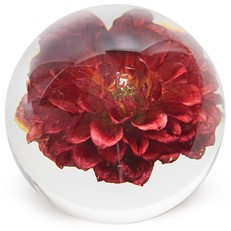 FloraCulture Paperweight - Red Dahlia