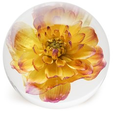 FloraCulture Paperweight - Yellow Dahlia