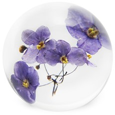 FloraCulture Paperweight - Violet
