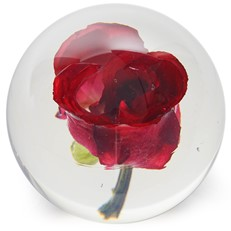 FloraCulture Paperweight - Red Rose
