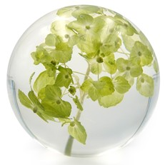 Floraculture Paperweight - Chartreuse Hydrangea