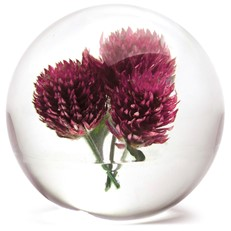 FloraCulture Paperweight - Globe Amaranth