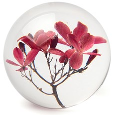 FloraCulture Paperweight - Crab Apple Blossom